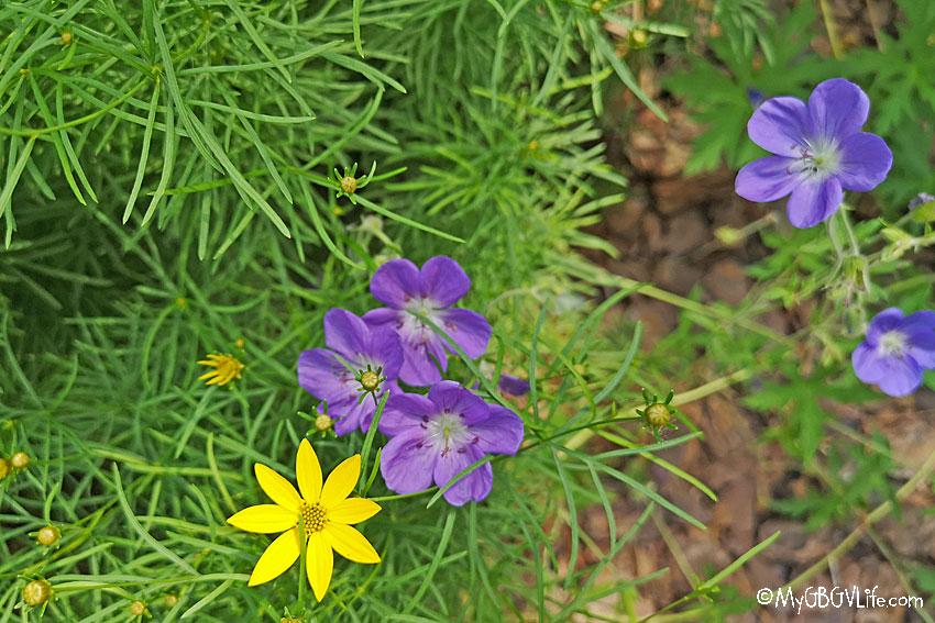 My GBGV Life small flowers