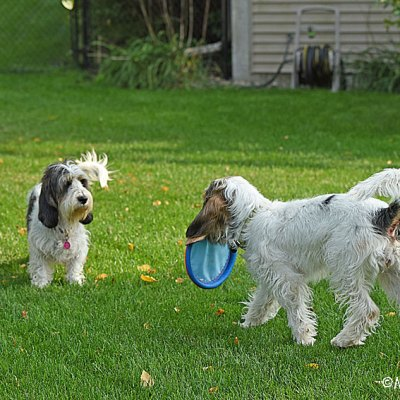 A Soft Frisbee To Play With Is Pure Happiness!