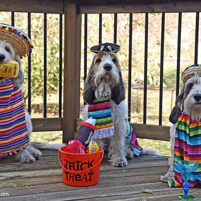 The 3 Amigas Wish You A Festive Howloween 2020!