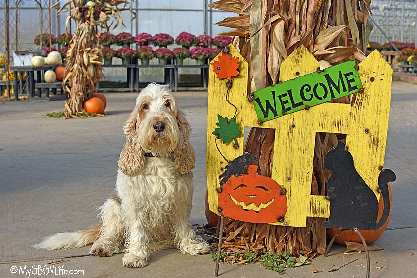My GBGV Life Halloween hound