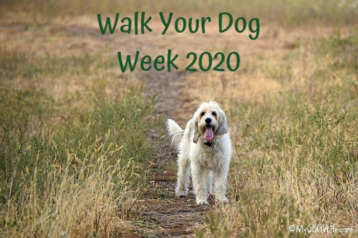 Walk Your Dog Week 2020 – A Look At Fall