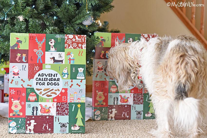 My GBGV Life Bailie sniffing Advent calendar