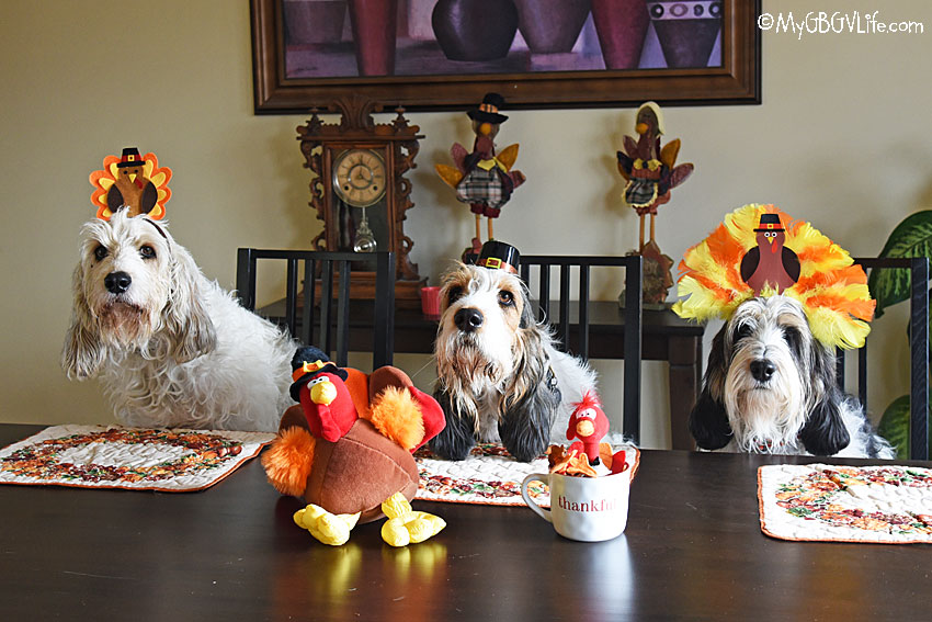 My GBGV Life Happy Turkey Day To All From The Turkey Hounds