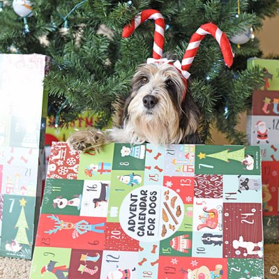 We're Thankful For Our Huge Dog Advent Calendars!