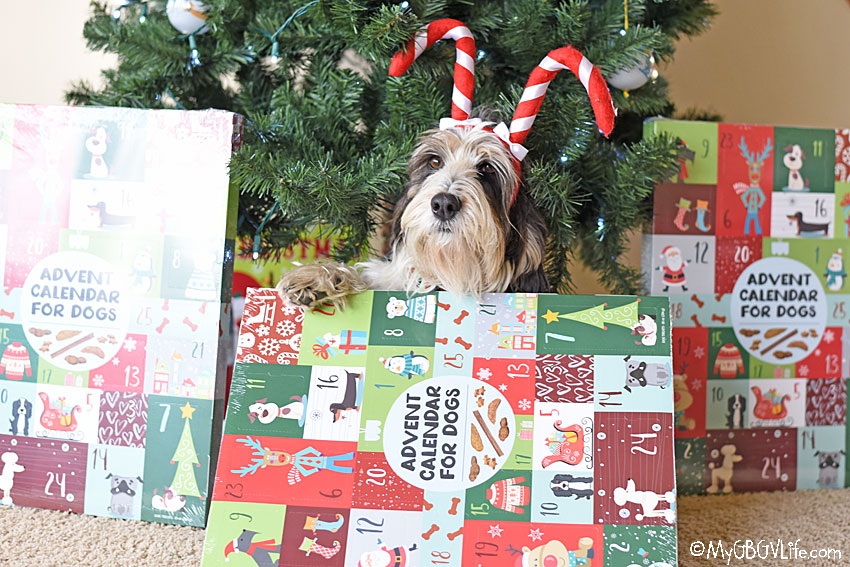 My GBGV Life We're Thankful For Our Huge Dog Advent Calendars!
