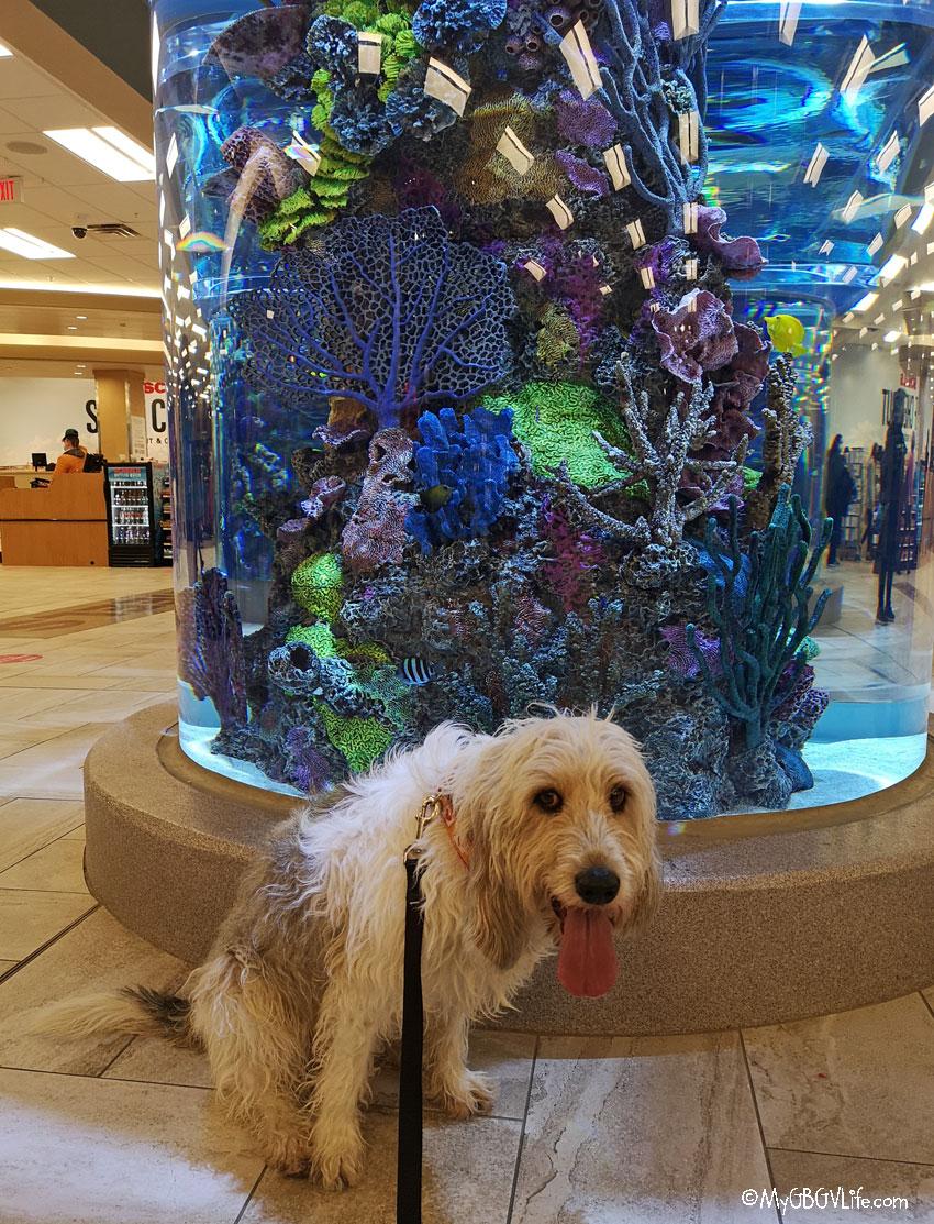 My GBGV Life aquarium