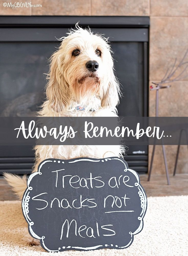 My GBGV Life Remember - Dog Treats are Snacks, Not Meals