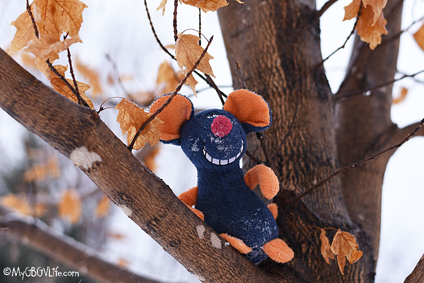 My gBGV Life rat in a tree
