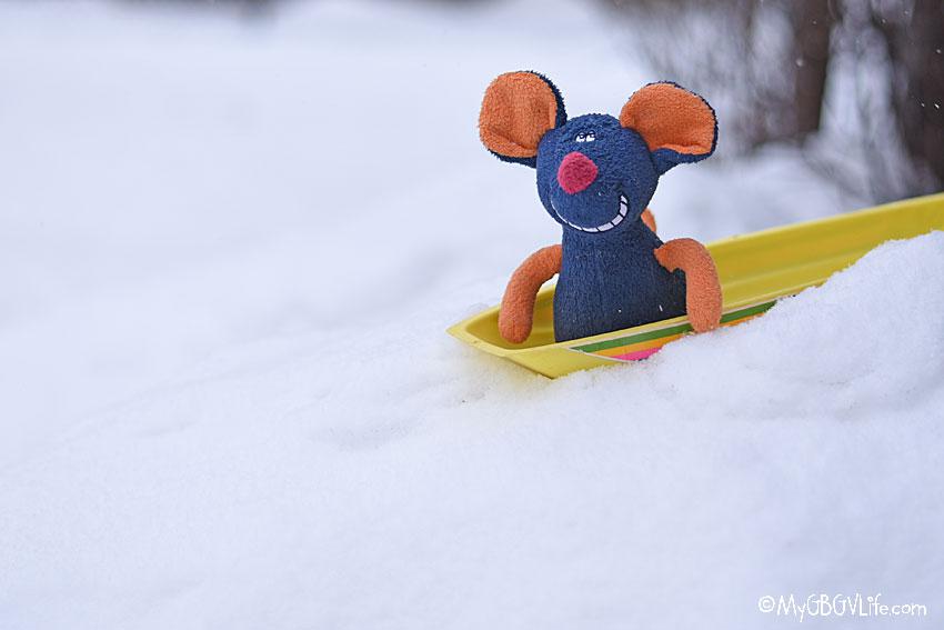 My GBGV Life sledding rat