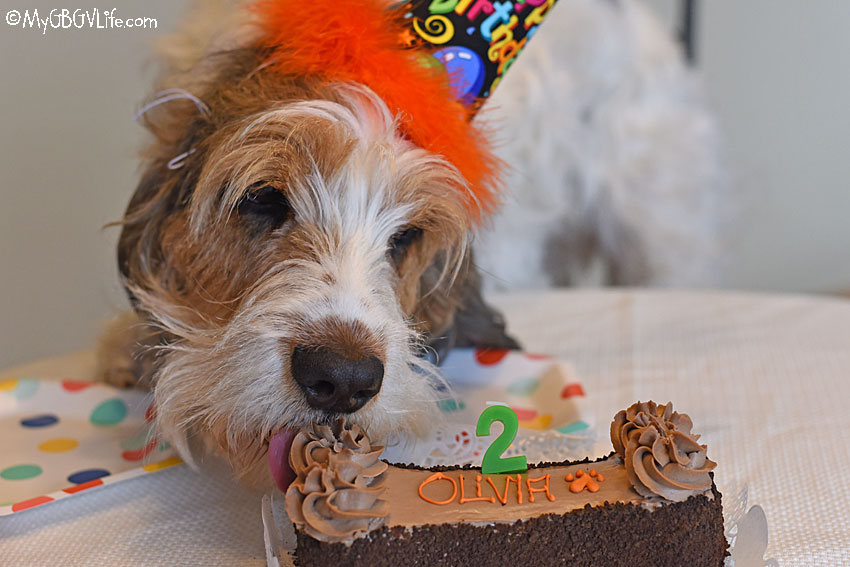 My GBGV Life Birthday Party Around The Yummy Carob Cake