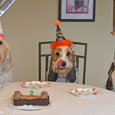 Birthday Party Around The Yummy Carob Cake