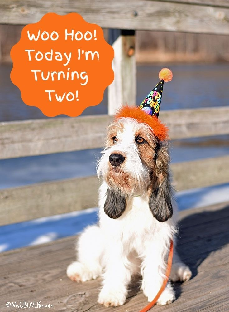 My GBGV Life Woo Hoo! Today I'm Turning Two!