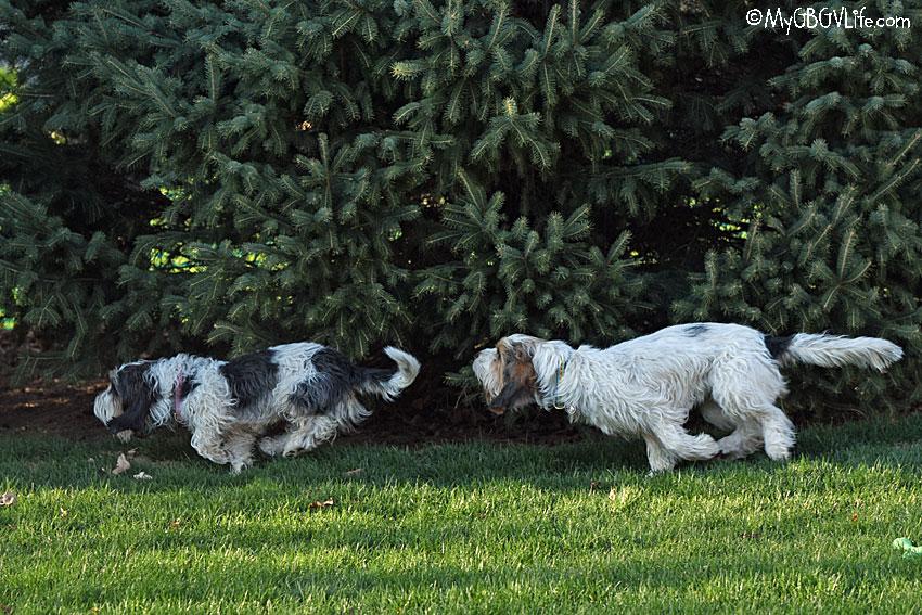 My GBGV Life Ring Around The Pine Trees To Reunite Sisters