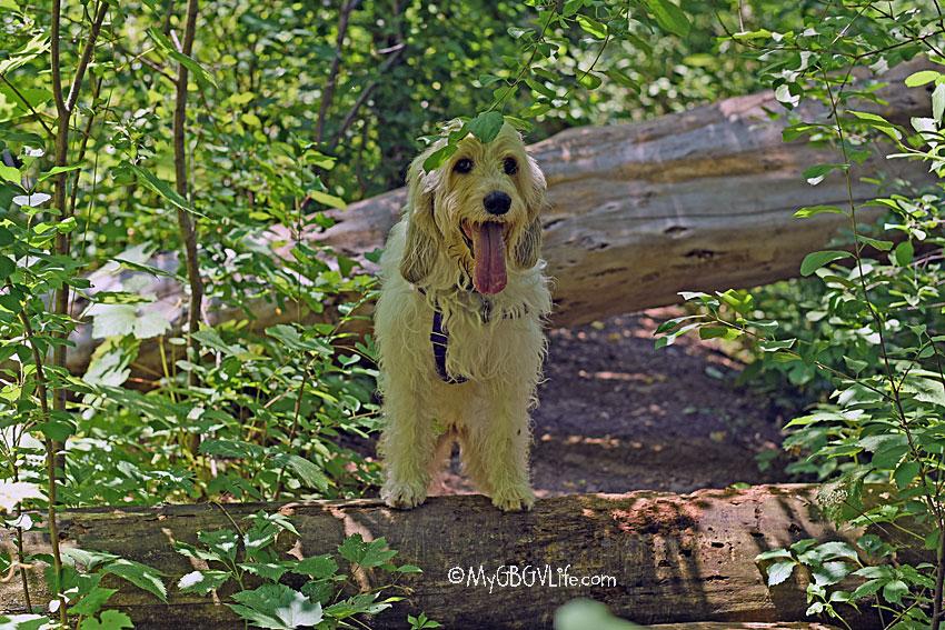 My GBGV Life posing on a log