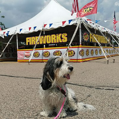 3 Tips To Keep Your Dog Safe On 4th Of July Weekend