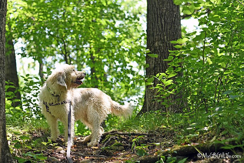 A Shady Walk In The Woods Along Minnehaha Creek