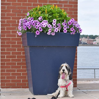Giant Flower Pots With Pretty Flowers