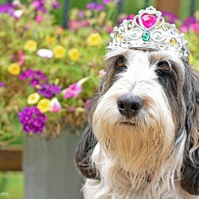 Happy Birthday Princess Madison, Hound Of The People
