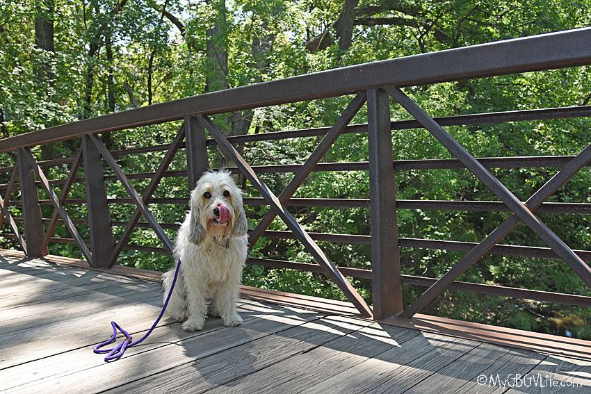 My GBGV Life on the high bridge
