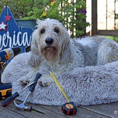 Enjoy Your Labor Day –  Paws Up, Work Down