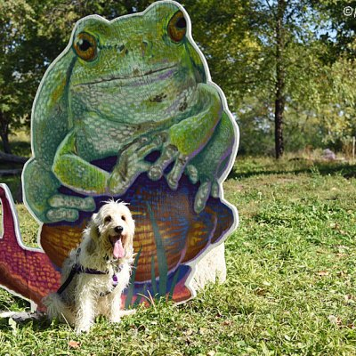 A Giant Frog Is About To Dognap Me!