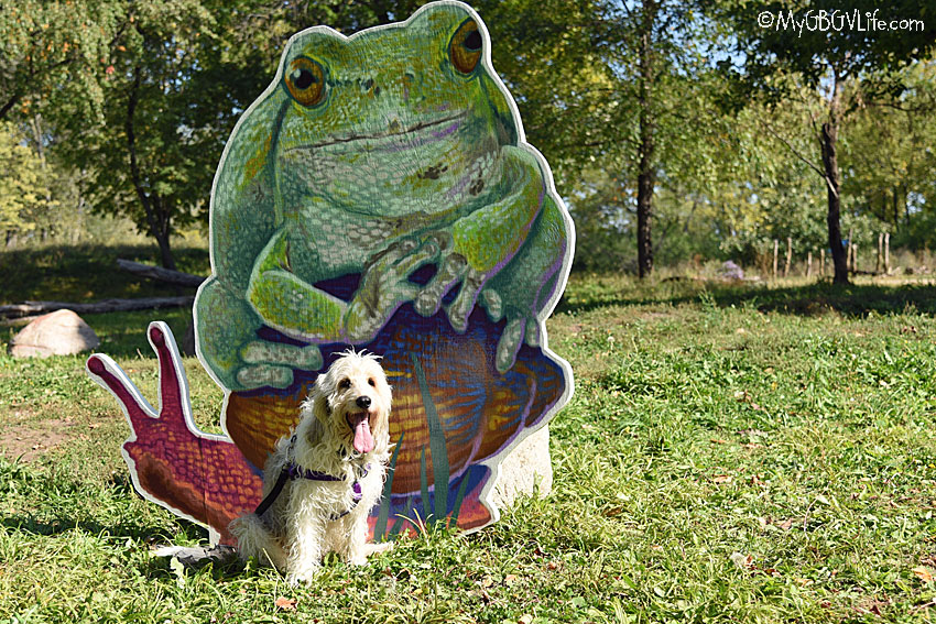 My GBGV Life A Giant Frog Is About To Dognap Me!