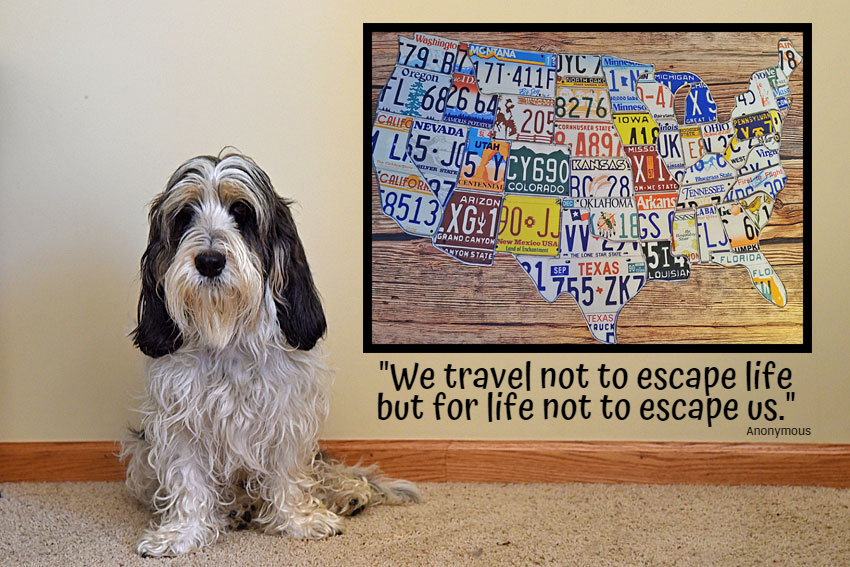 My GBGV Life Wise Words For Traveling Dogs And Their Humans
