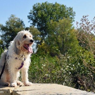 7 Dog Walking Tips For National Walk Your Dog Week