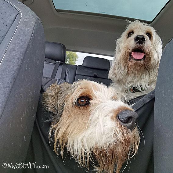 My GBGV Life in the car Saturday