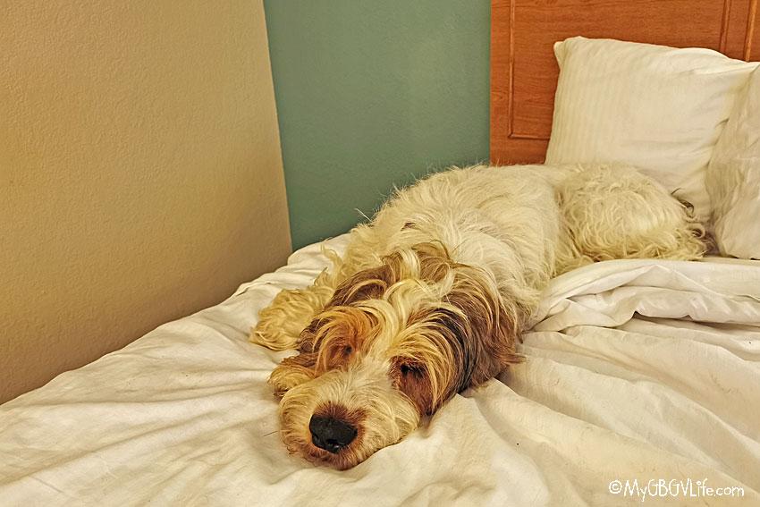 My GBGV Life sleepy Olivia