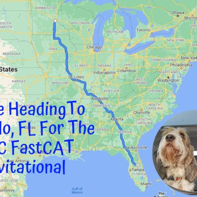 We're Going To Orlando For The AKC FastCAT Invitational