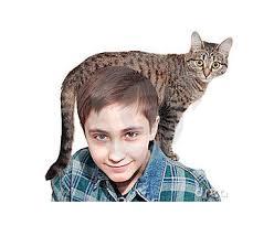 muchacho y su gato