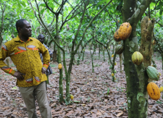 COCOBOD to announce new cocoa prices today