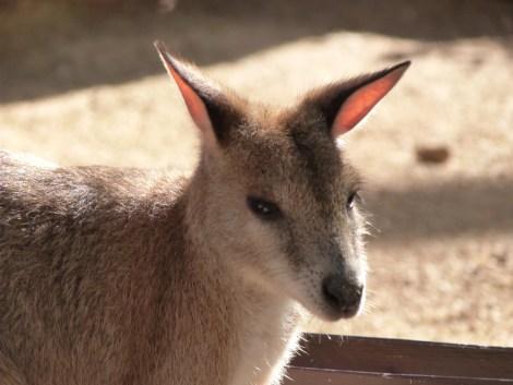 Le visa de tourisme pour le pays des kangourous se demande sur Internet