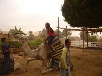 Egypte 379
