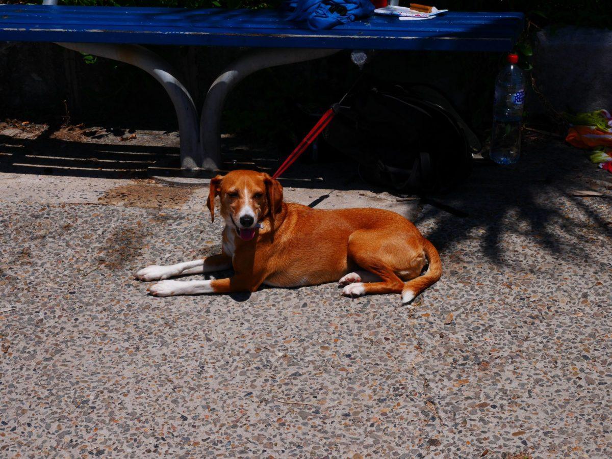 Emmener son chien de France en Australie (II) – My Globe Story