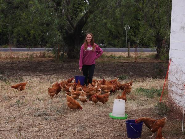 Moi et mes poules (Geelong - Australie / 2015)