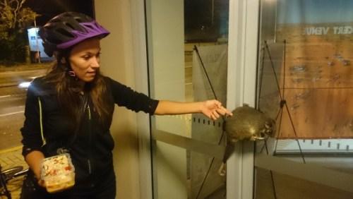 Rencontre avec un possum
