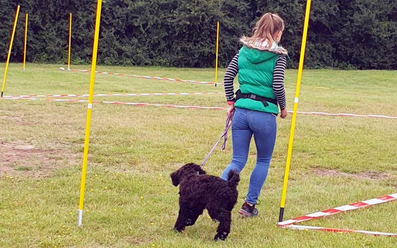 Laufen mit Blindenführhund