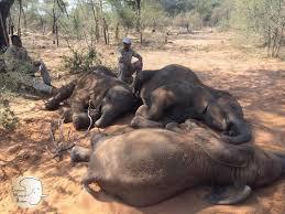 11 Elephants Found Dead