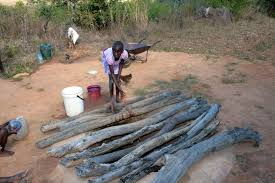 Gokwe's Zhomba Community in Hard Hit by Water Crisis
