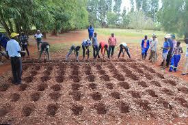 Chinotimba Spearheads Mazowe Pfumvudza Program