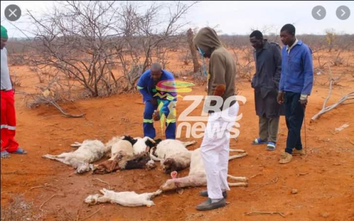 WATCH: A Gwanda Mysterious Cat-Like Creature Has Killed 57 Goats & Sleeps with Women