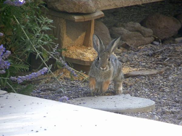 Bunny Scamper