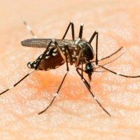 zika, mosquito, disease, microcephaly, CDC
