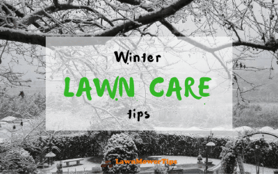 Useful-tips-for-winter-lawn-care-1