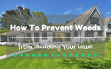 how-to-prevent-weeds-from-invading-your-lawn