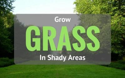 grow-grass-in-shady-areas