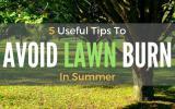 Avoid-Lawn-Burn-In-Summer