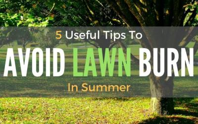 Avoid-Lawn-Burn-In-Summer